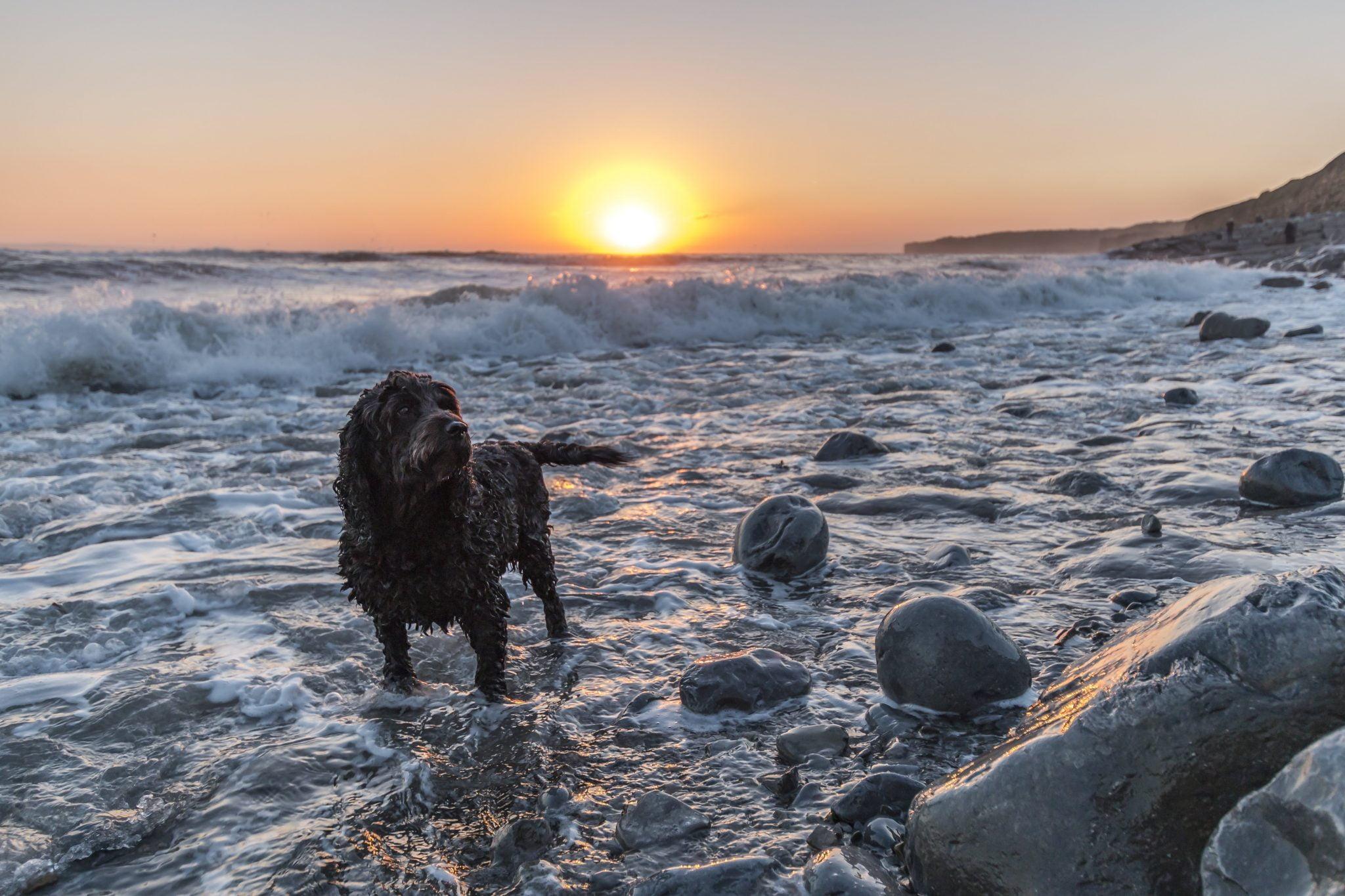 Dog friendly Llantwit Major beach